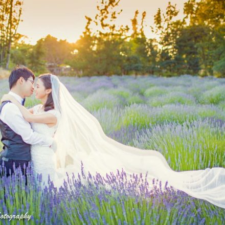 Sonoma Lavender Winery Pre-wedding